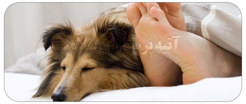 راه های انتقال بیماری از سگ به انسان